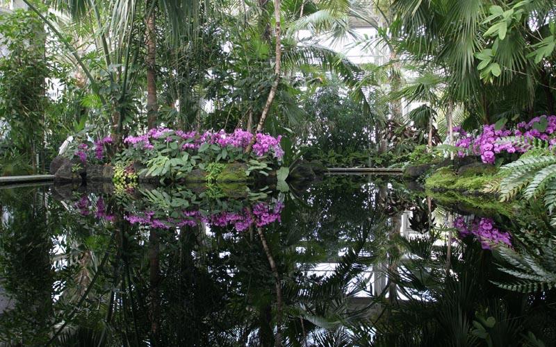 Contact The Garden New York Botanical Garden Party