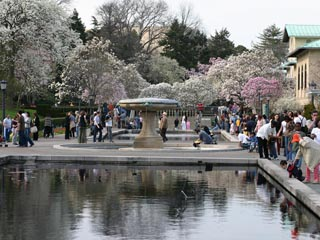 Jenkins Fountain, Lily Pond Terrace, Brooklyn Botanic Garden