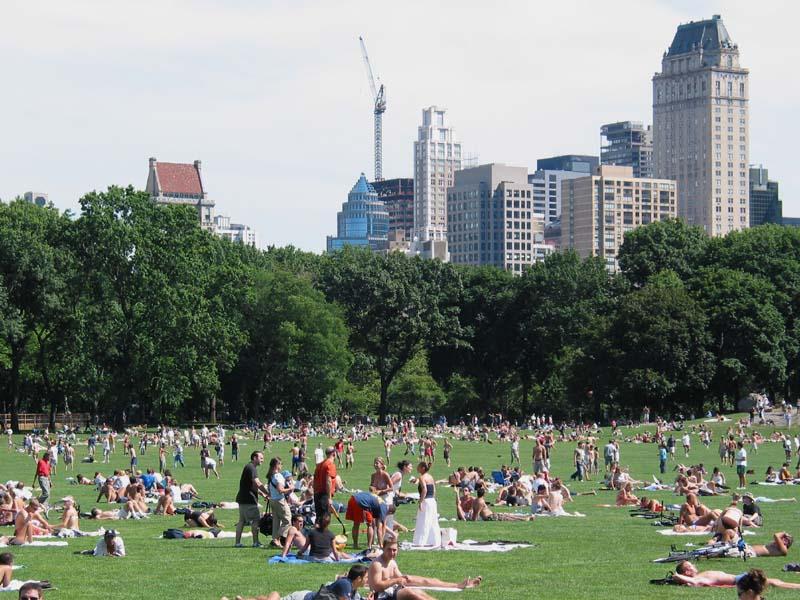 Central Park Sommer in Central Park's Sheep